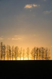 春の夕暮れ 美瑛町の写真素材 [FYI01164128]