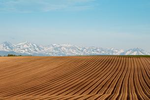 春の畑と残雪の山並み の写真素材 [FYI01164135]