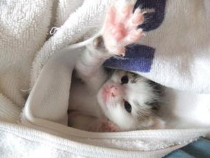 子猫の写真素材 [FYI01164238]
