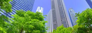 新緑の新宿副都心の風景(パノラマ)の写真素材 [FYI01164558]
