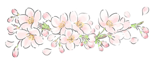 桜のイラスト素材 [FYI01164709]