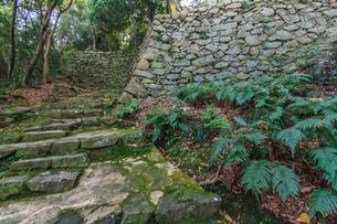 秋の宇和島城の風景の写真素材 [FYI01164733]