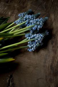 古木のボードの上のブルーのムスカリの写真素材 [FYI01164836]