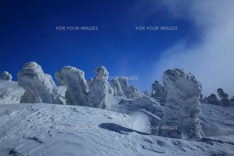 八甲田の樹氷の写真素材 [FYI01165345]