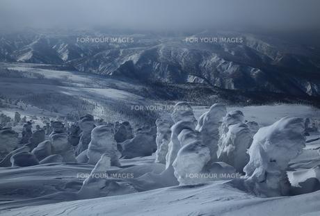 八甲田の樹氷の写真素材 [FYI01165386]