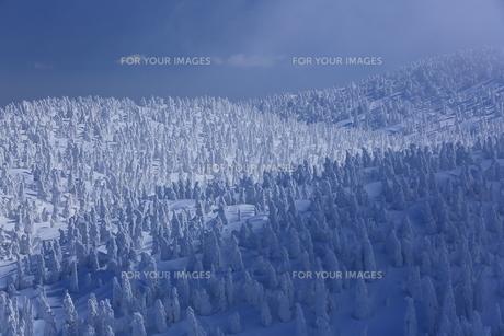 八甲田の樹氷の写真素材 [FYI01165389]