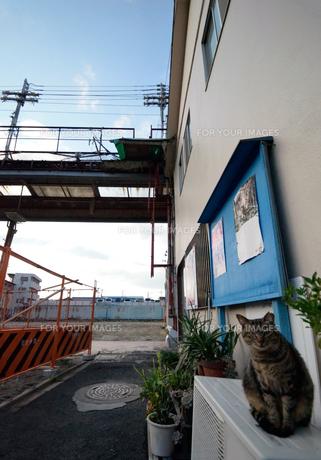 シャッター通りと街角の猫の写真素材 [FYI01165579]