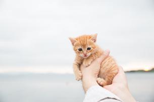 仔猫の写真素材 [FYI01166021]