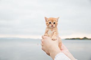 仔猫の写真素材 [FYI01166022]