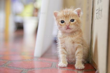 仔猫の写真素材 [FYI01166025]