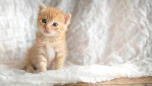 仔猫の写真素材 [FYI01166040]