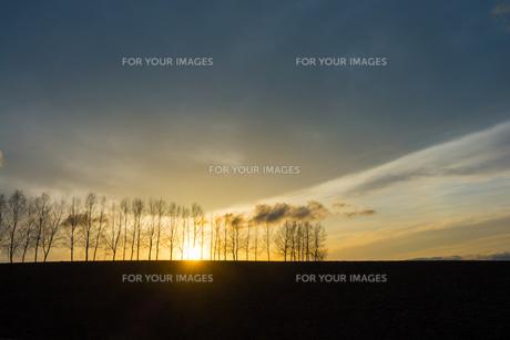 春の夕暮れの空とシラカバ並木 美瑛町の写真素材 [FYI01166119]