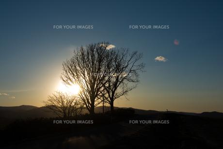 春の夕暮れの空と冬木立の写真素材 [FYI01166120]