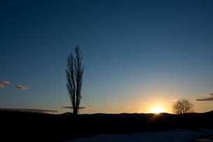 春の夕暮れの空とポプラの写真素材 [FYI01166122]