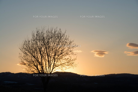 春の夕暮れの空と冬木立 美瑛町の写真素材 [FYI01166124]