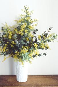 白い花器に活けられたミモザとユーカリの写真素材 [FYI01166200]