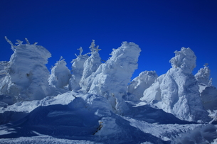 冬の山形蔵王の写真素材 [FYI01166273]