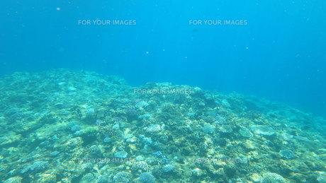 海の中  珊瑚の写真素材 [FYI01166537]