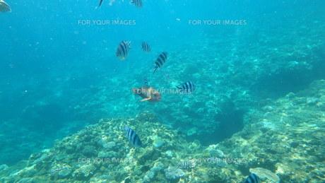 海の中の写真素材 [FYI01166538]