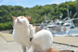 港の猫の写真素材 [FYI01166551]