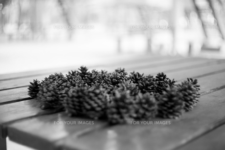 松ぼっくり モノクロ 背景ハイキー 公園 テーブルの写真素材 [FYI01166558]