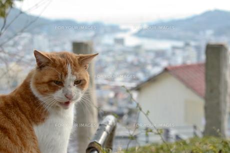 つぶやく猫の写真素材 [FYI01166559]