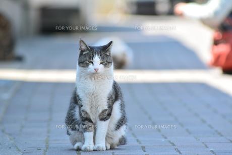 ムスッとした猫の写真素材 [FYI01166560]