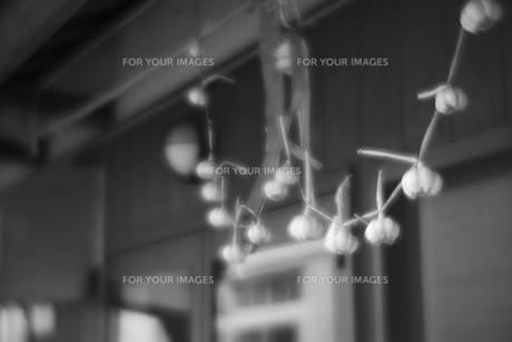 吊るし にんにく モノクロの写真素材 [FYI01166563]
