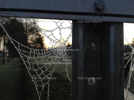 凍った蜘蛛の巣 の写真素材 [FYI01166670]