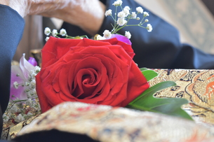 バラのコサージュを付けたおじいちゃんの写真素材 [FYI01166694]