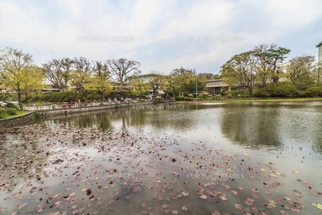 春の久保田城の大手門の堀の風景の写真素材 [FYI01166930]