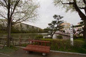 春の久保田城の大手門の堀の風景の写真素材 [FYI01166933]
