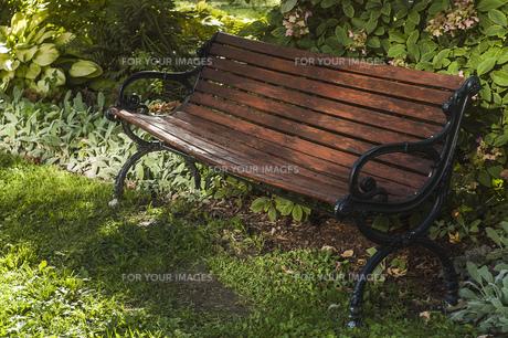 ベンチ 茶色 自然の中 植物 日陰 木製 素材の写真素材 [FYI01167139]