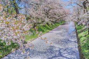 春の弘前城の風景の写真素材 [FYI01167145]