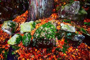 京都大江山の山中の岩の写真素材 [FYI01167148]