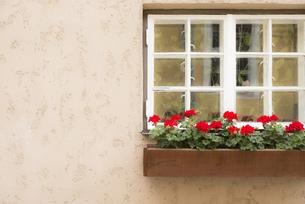 背景素材 窓 鉢植え 花 壁 ふんわり仕上げの写真素材 [FYI01167178]