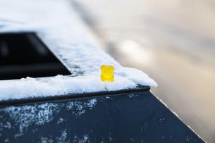 冬景色素材 雪の上のクマ(グミ)海外写真の写真素材 [FYI01167315]