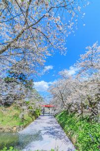 移転後の弘前城の水堀の風景の写真素材 [FYI01167359]