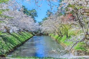 移転後の弘前城の水堀の風景の写真素材 [FYI01167360]