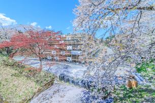 春の移転後の弘前城の天守台の風景の写真素材 [FYI01167362]