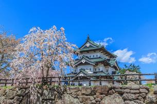 移転後の弘前城の春の天守の風景の写真素材 [FYI01167375]