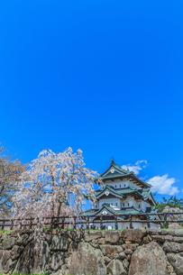 移転後の弘前城の春の天守台の風景の写真素材 [FYI01167376]