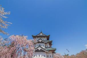 移転後の弘前城の春の天守の風景の写真素材 [FYI01167574]