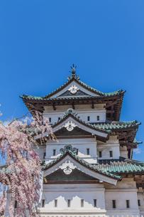 移転後の弘前城の春の天守の風景の写真素材 [FYI01167575]