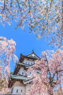 移転後の弘前城の春の天守の風景の写真素材 [FYI01167576]