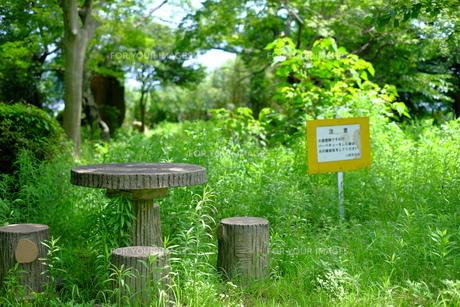 雑草だらけの公園のテーブルの写真素材 [FYI01167594]