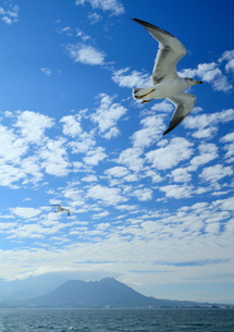 雲仙普賢岳とカモメの写真素材 [FYI01167647]