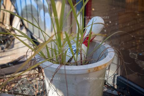 草とピンの写真素材 [FYI01168025]