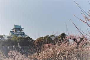 大阪城×梅の写真素材 [FYI01168068]