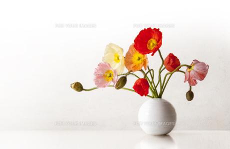 丸い花瓶のポピーの写真素材 [FYI01168173]